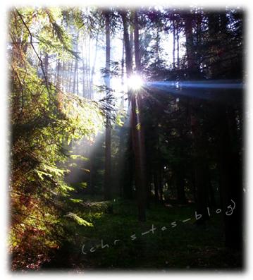 Herbstimpressionen im Wald