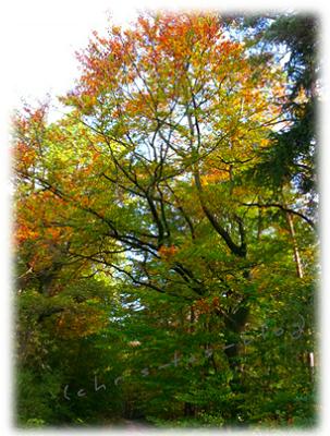 Herbstzauber - buntes Laub an den Bäumen