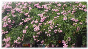 Blütenpracht Hippie Markt Las Dalias Ibiza