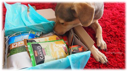 Hunde-Überraschungsbox dogolindo