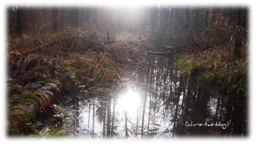 Impressionen Wald