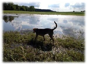 Hochwasser bei Neustadt Aisch