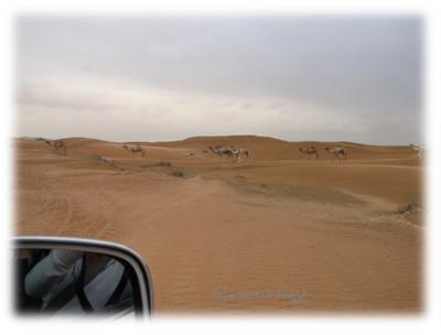 Kamele kreuzen unseren Weg bei der Jeep Safari in der Dubai Wüste