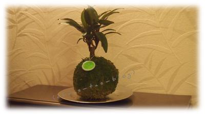 Kibonu als außergewöhnliches Deko-Objekt