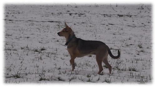 Mandy im Schnee