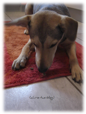 Mandy testet Hundefutter PRO PLAN®