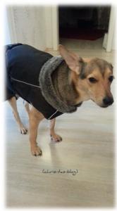 Mandy trägt Hurtta Winter Jacket Season