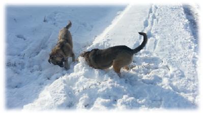 Mandy und Johnny beim Schnee-Spiel