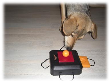 Mandy und die Dog Activity Box