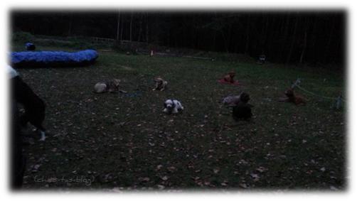 Mandys Hundeschule-Freunde