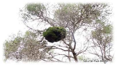 Natur pur auf Mallorca