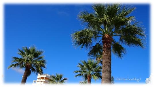 Palmen auf Mallorca