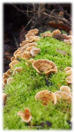 Pilze an den Bäumen