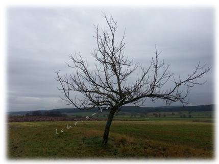 Regen im Dezember 2014