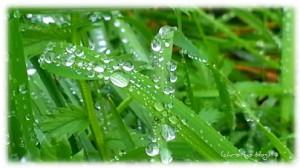 Regentropfen auf Wiese