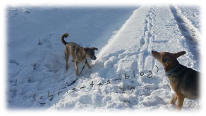 Spiele im Schnee - unsere Hunde haben Spaß