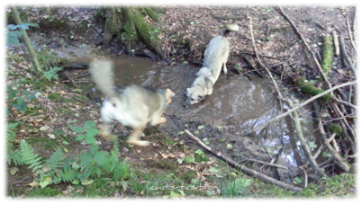 Unsere Hunde am Bach