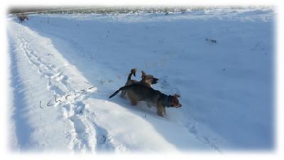 Unsere Vierbeiner im Schnee