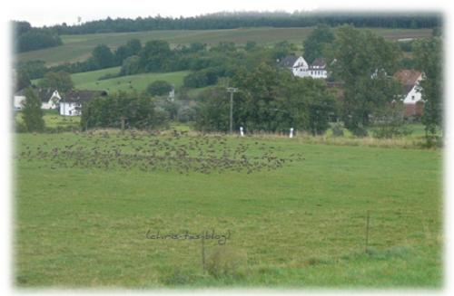 Vögel versammeln sich