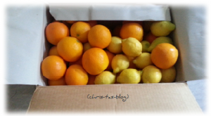 Valencia Orangen