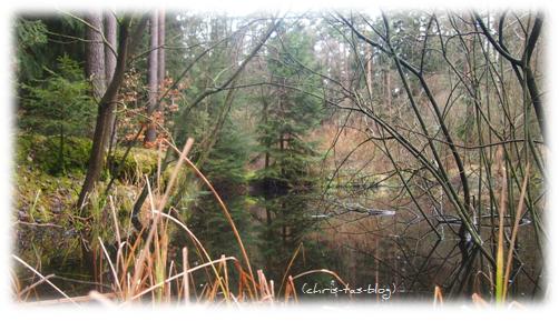 Wald-Idylle