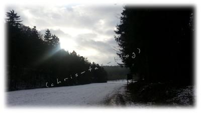 Waldspaziergang Januar 2015