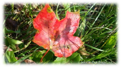 buntes Blatt im Herbst