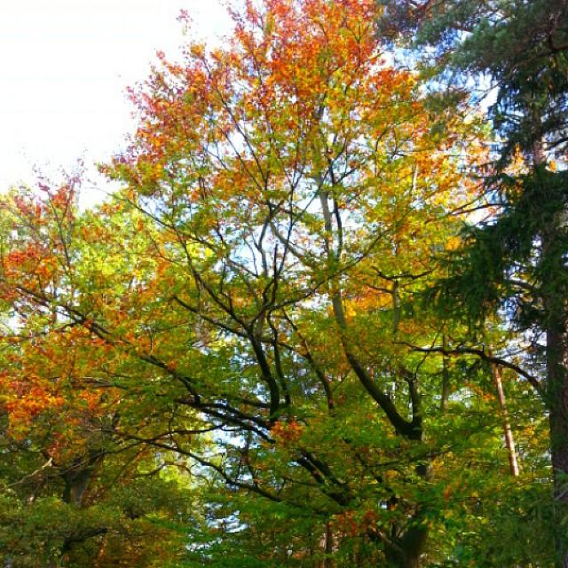 Herbst... #instalike #instaphoto #like4like #naturepic #nature #herbst #herbstzauber