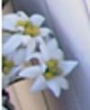 Edelweiss - siin macht daraus eine anti-aging-Pflegeserie
