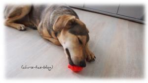 Mandy und ihr neues Hundespielzeug