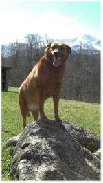 Unser Spaziergang mit Jeremy – einem Hund aus dem Tierheim