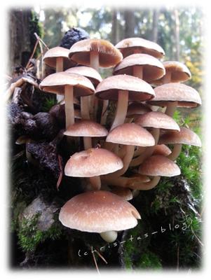 kleine Pilze im Wald