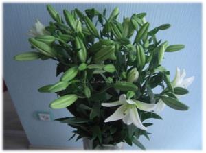 weiße Lilien in XL in meiner Bodenvase
