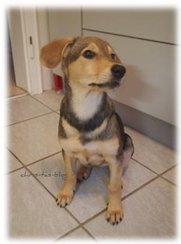 Unser neues Familienmitglied: Mandy