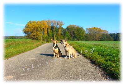 mit Mandy und Johnny beim Spaziergang
