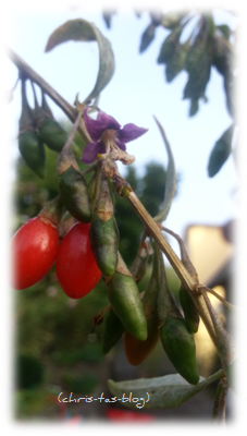 rote und grüne Gojibeeren