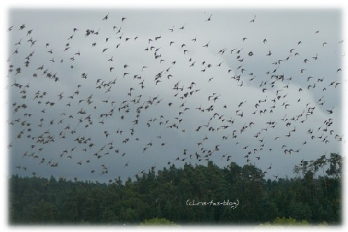 vögel auf dem Weg in den Süden